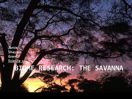 Jamie Shayam Grant Science 1 The Savanna biome has a climate in which the temperatures outside range anywhere from 20°C (68°F) to 30°C (86°F). As you.