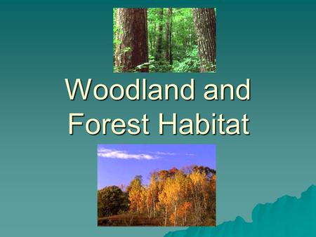 Woodland and Forest Habitat. What is a habitat?  The place where an animal or plant lives.