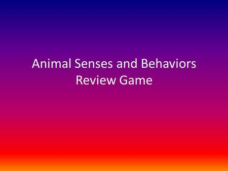 Animal Senses and Behaviors Review Game. Which sensory organ allows most animals to see their prey? eyes.