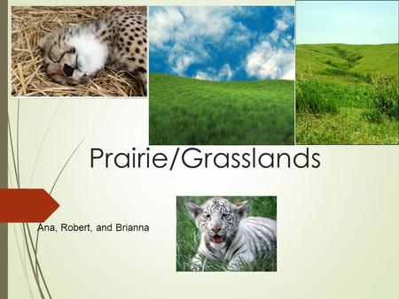 Prairie/Grasslands Ana, Robert, and Brianna. Where is ecosystem located?  Canada to Texas  Prairies are in North America, Europe, Asia,  South America,