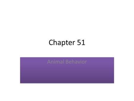 Chapter 51 Animal Behavior. Migration Animals migrate in response to environmental stimuli, like changes in the day length, precipitation and temperature.