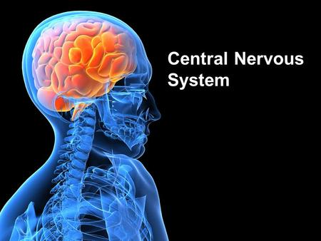 Central Nervous System. Lecture Outline Spinal Cord Design & Function Functional Brain Regions –Flow of Information –Learning.