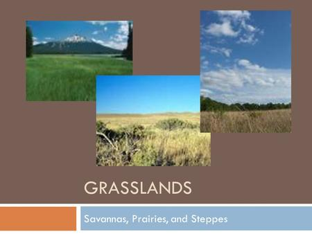 GRASSLANDS Savannas, Prairies, and Steppes. There are 2 main kinds of grasslands:  Tropical grasslands called savannas  Temperate grasslands include.