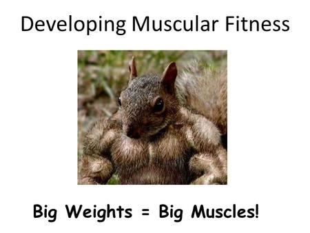 Developing Muscular Fitness Big Weights = Big Muscles!