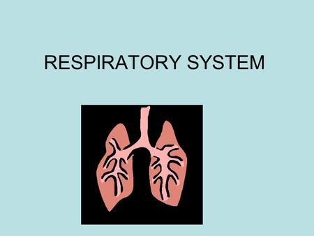 RESPIRATORY SYSTEM. Increasing complexity in respiration Earthworms – gases diffuse through skin Insects – tracheal system (limited capacity) Fish – gills.