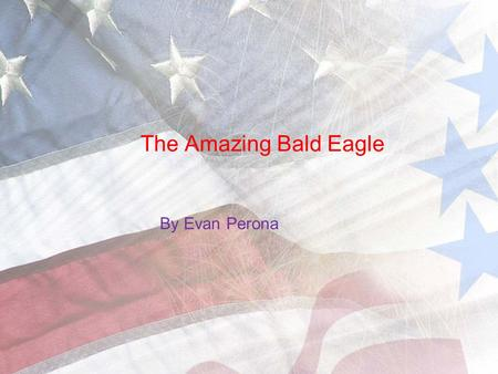 The Amazing Bald Eagle By Evan Perona. Bald Eagle Basics Bald eagles are vertebrates because they have a backbone. Another reason is because they are.