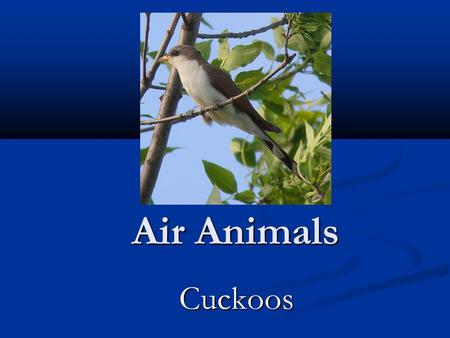 Air Animals Cuckoos Cuckoos. About the Cuckoos The cuckoos are a family, Cuculidae, of near passerine birds. The order Cuculiformes, in addition to the.