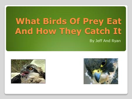 What Birds Of Prey Eat And How They Catch It By Jeff And Ryan.