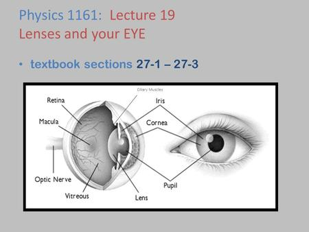textbook sections 27-1 – 27-3 Physics 1161: Lecture 19 Lenses and your EYE Ciliary Muscles.