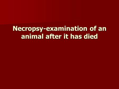 Necropsy-examination of an animal after it has died