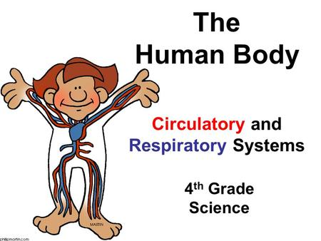 The Human Body Circulatory and Respiratory Systems 4 th Grade Science.