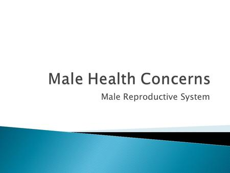 Male Reproductive System.  What type of Dr. specializes in the Male reproductive system?  Urologist.