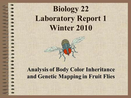 Biology 22 Laboratory Report 1 Winter 2010 Analysis of Body Color Inheritance and Genetic Mapping in Fruit Flies.