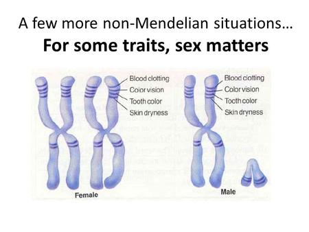 A few more non-Mendelian situations… For some traits, sex matters.