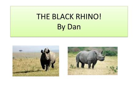 THE BLACK RHINO! By Dan. Habitat They live in southern and eastern Africa for example Kenya and Namibia.