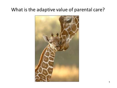 1 What is the adaptive value of parental care?. 2 6/12/08: Parental care Lecture objectives: 1.Be able to apply a cost-benefit approach to the evolution.