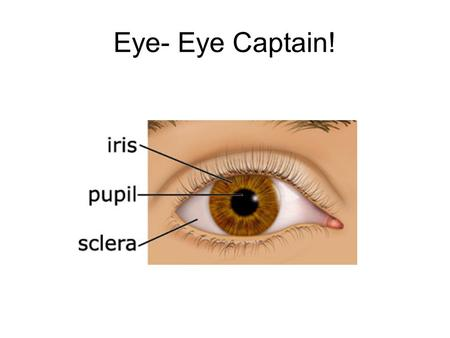 Eye- Eye Captain!.