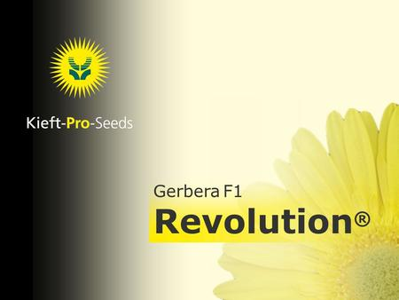 .... Gerbera F1 Revolution ®. Gerbera Revolution ® F1 Revolution is a remarkable Pot Gerbera generation, which excels in earliness over each and every.