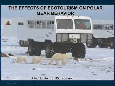 THE EFFECTS OF ECOTOURISM ON POLAR BEAR BEHAVIOR Gillian Eckhardt, MSc. student September 2007.