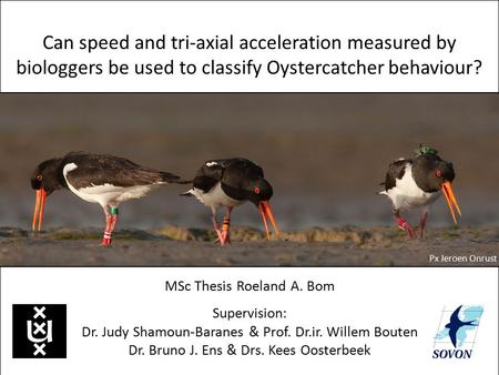 Can speed and tri-axial acceleration measured by biologgers be used to classify Oystercatcher behaviour? MSc Thesis Roeland A. Bom Supervision: Dr. Judy.