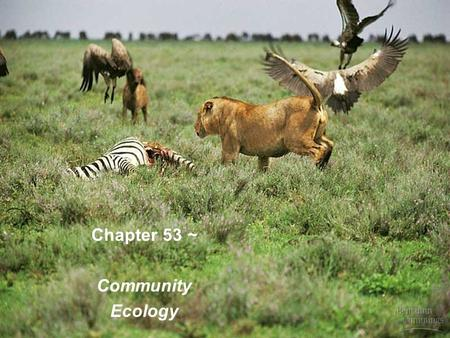 Chapter 53 ~ Community Ecology.