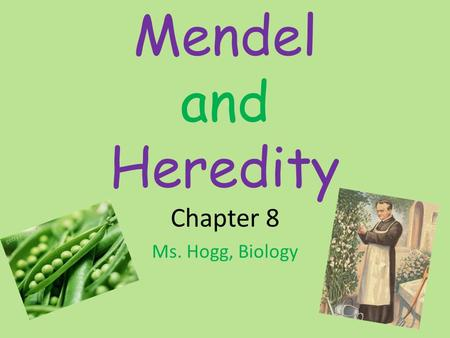 Mendel and Heredity Chapter 8 Ms. Hogg, Biology. The Origins of Genetics Heredity – the passing of characteristics from parent to offspring – Before DNA.
