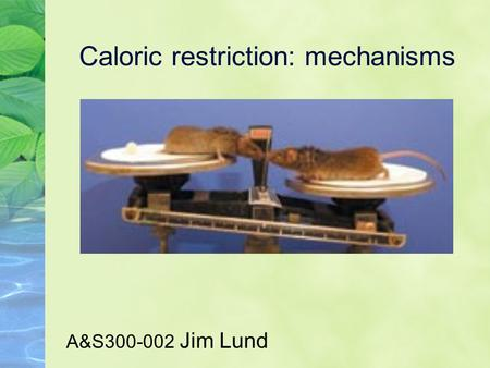 Caloric restriction: mechanisms A&S300-002 Jim Lund.