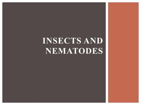 INSECTS AND NEMATODES. 1)Describe the biology of insects 2)Classify insects 3)Classify nematodes and describe their biology 4)Explain scouting and threshold.
