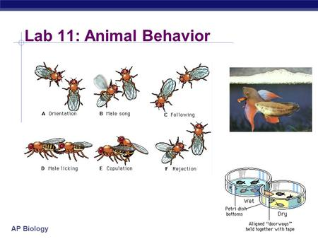 Lab 11: Animal Behavior.