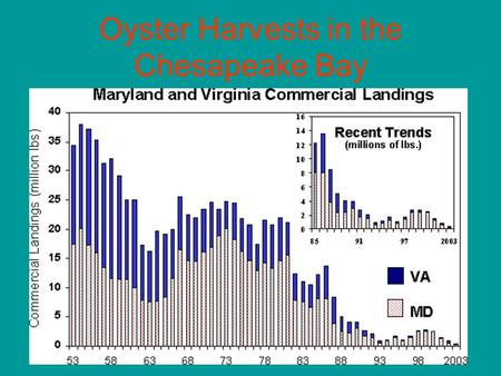 Oyster Harvests in the Chesapeake Bay. A River And an Ocean What Is an Estuary? A meeting place between: