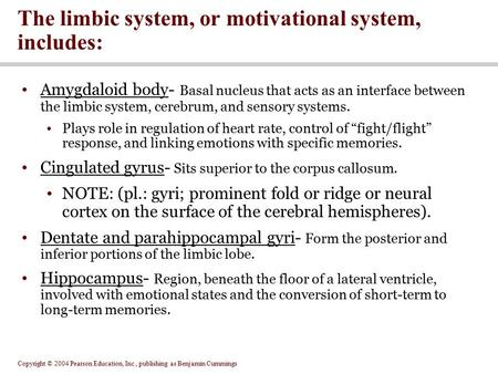 Copyright © 2004 Pearson Education, Inc., publishing as Benjamin Cummings Amygdaloid body- Basal nucleus that acts as an interface between the limbic system,