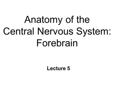Anatomy of the Central Nervous System: Forebrain Lecture 5.