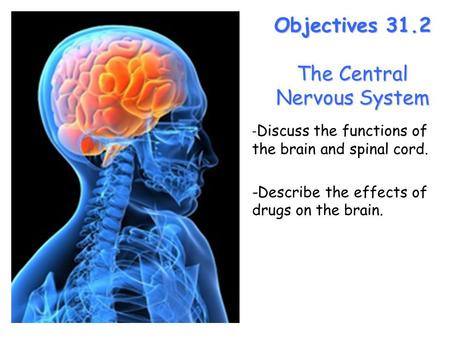 Lesson Overview Lesson Overview The Central Nervous System Objectives 31.2 The Central Nervous System - Discuss the functions of the brain and spinal cord.