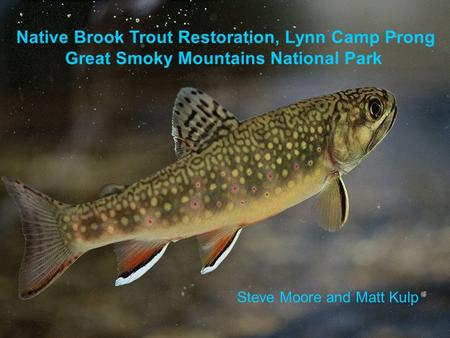 Native Brook Trout Restoration, Lynn Camp Prong Great Smoky Mountains National Park Steve Moore and Matt Kulp.
