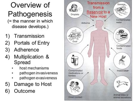 Overview of Pathogenesis (= the manner in which disease develops.) 1)Transmission 2)Portals of Entry 3)Adherence 4)Multiplication & Spread host mechanisms.