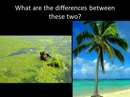What are the differences between these two?. What are the similarities between these two?