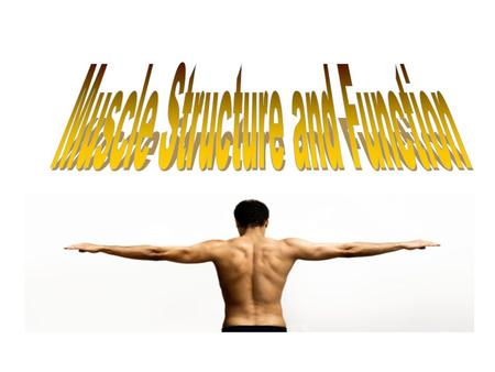 Types of Muscle The human body is comprised of 324 muscles Muscle makes up 30-35% (in women) and 42-47% (in men) of body mass. Three types of muscle: