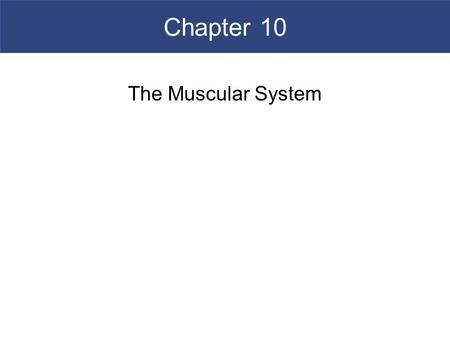 Chapter 10 The Muscular System. An Introduction to the Muscular System  The Muscular System  Consists only of skeletal muscles  Muscle Organization.