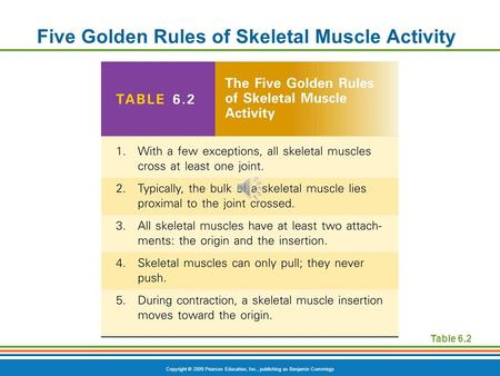 Copyright © 2009 Pearson Education, Inc., publishing as Benjamin Cummings Five Golden Rules of Skeletal Muscle Activity Table 6.2.