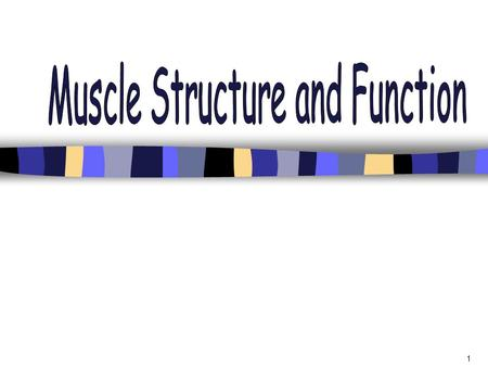 1. 2 Types of Muscle The human body is comprised of 324 muscles Muscle makes up 30-35% (in women) and 42-47% (in men) of body mass. Three types of muscle: