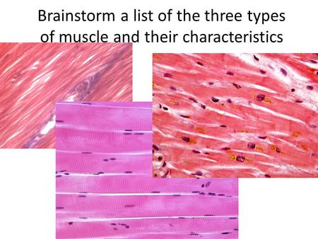 Brainstorm a list of the three types of muscle and their characteristics.