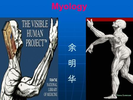Myology. Morphology –Muscle belly 肌腹 –Tendon 肌腱 aponeurosis 腱膜 Classification –Long muscle 长肌 –Short muscle 短肌 –Broad muscle 阔肌 –Orbicular mucle 轮 匝肌.