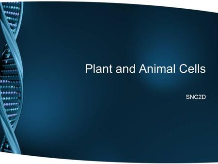 Plant and Animal Cells SNC2D.