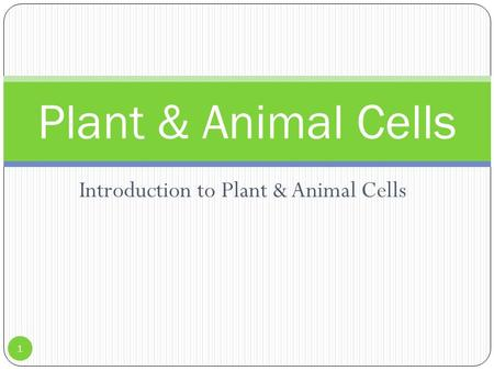 Introduction to Plant & Animal Cells Plant & Animal Cells 1.