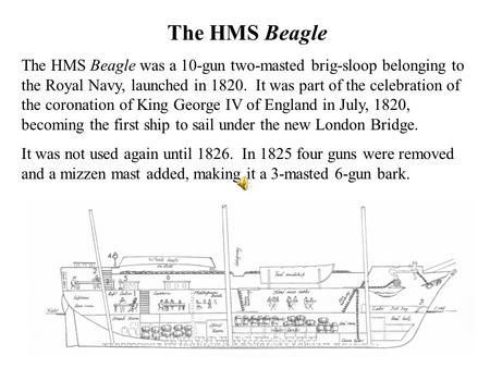 The HMS Beagle The HMS Beagle was a 10-gun two-masted brig-sloop belonging to the Royal Navy, launched in 1820. It was part of the celebration of the coronation.