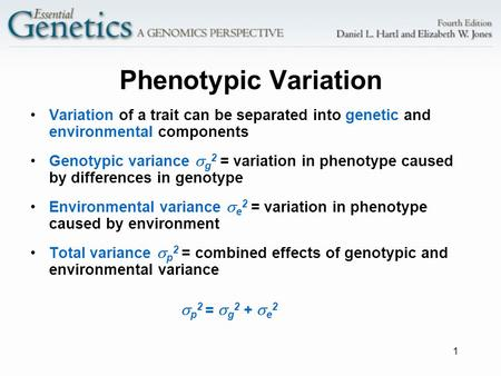 1 Phenotypic Variation Variation of a trait can be separated into genetic and environmental components Genotypic variance  g 2 = variation in phenotype.
