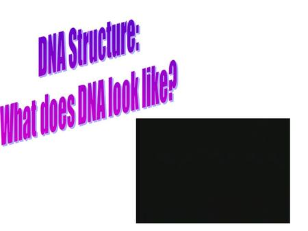 "Watson and Crick Watson and Crick studied the work of others to determine the structure of DNA Figured that it is a ""Double Helix"": –Twisted ladder."