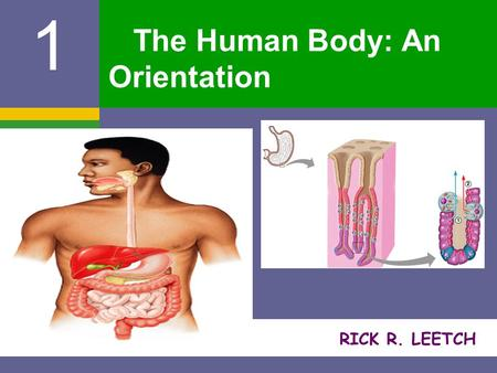 RICK R. LEETCH 1 The Human Body: An Orientation. The Human Body – An Orientation AA natomy – study of the structure and shape of the body and its parts.