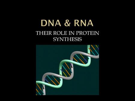 THEIR ROLE IN PROTEIN SYNTHESIS