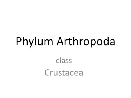 Phylum Arthropoda class Crustacea Largest phylum of animals w/ approx One million known species.